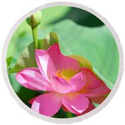 D48l-96 Water Lily At Goodale Park Photo Round Beach Towel