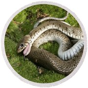 Grass Snake Playing Dead Round Beach Towel