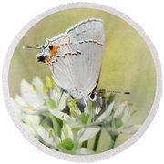 Gray Hairstreak Butterfly IIi Round Beach Towel