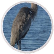 Round Beach Towel featuring the photograph Great Blue Heron  by Christiane Schulze Art And Photography