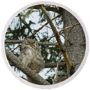 Round Beach Towel featuring the photograph Great Horned Owls by Michael Chatt