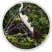 Great White Egret Round Beach Towel by Chris Flees
