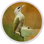 Grey-headed Woodpecker Round Beach Towel