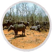 Herd Of Cape Buffaloes Syncerus Caffer Round Beach Towel