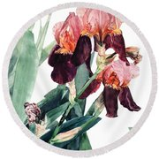 Watercolor Of A Pink And Maroon Tall Bearded Iris I Call Iris La Forza Del Destino Round Beach Towel