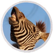 Round Beach Towel featuring the photograph Laughing Zebra by Nick  Biemans