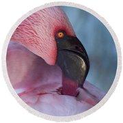 Lesser Flamingo Preening Round Beach Towel