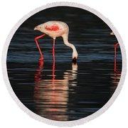 Lesser Flamingos In Water Round Beach Towel