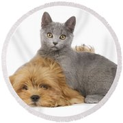 Lhasa Apso Pup And Kitten Round Beach Towel
