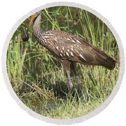 Round Beach Towel featuring the photograph Limpkin In The Glades by Christiane Schulze Art And Photography