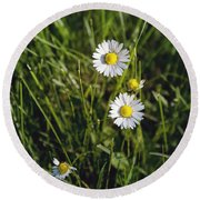 Little White Daisies Round Beach Towel