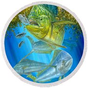 Mahi Mahi Hunting In Sargassum Round Beach Towel