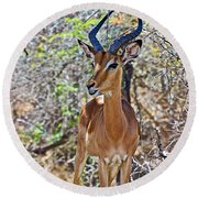 Male Impala In Kruger National Park-south Africa   Round Beach Towel