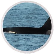 Round Beach Towel featuring the photograph Male Orca Killer Whale In Monterey Bay California 2013 by California Views Mr Pat Hathaway Archives