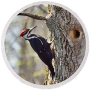 Male Pileated Woodpecker Round Beach Towel
