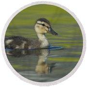 Mallard Duck Swimming In Marsh Pond Round Beach Towel