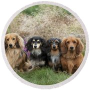 Miniature Long-haired Dachshunds Round Beach Towel