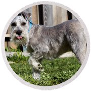 Round Beach Towel featuring the photograph Miniature Schnauzer by Michael Chatt
