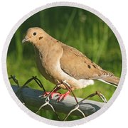 Morning Dove I Round Beach Towel
