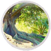 Morton Bay Fig Tree Round Beach Towel by Leanne Seymour