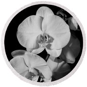 Moth Orchid Bw Round Beach Towel