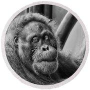 Orangutan Mama Round Beach Towel by Phill Doherty