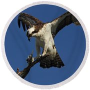 Round Beach Towel featuring the photograph Osprey With A Fish Photo by Meg Rousher
