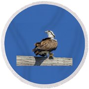 Osprey With Fish In Talons Round Beach Towel by Dale Powell