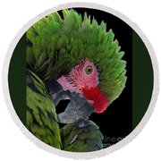 Pensive Parrot Round Beach Towel