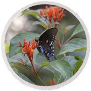 Round Beach Towel featuring the photograph Pipevine Swallowtail II by Carol  Bradley
