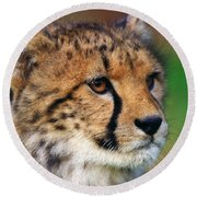 Round Beach Towel featuring the photograph Portrait Of A Cheetah Cub by Nick  Biemans