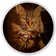 Portrait Of A Tramp Cat Round Beach Towel