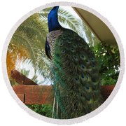 Proud Peacock Round Beach Towel
