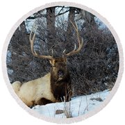 Round Beach Towel featuring the photograph Rocky Mountain Elk by Michael Chatt