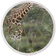Rothschilds Giraffe Round Beach Towel