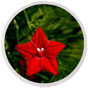 Scarlet Morning Glory Round Beach Towel