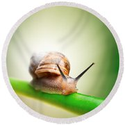 Snail On Green Stem Round Beach Towel