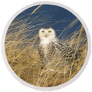 Snowy Owl In The Dunes Round Beach Towel