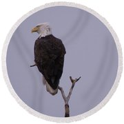 Solo  Bald Eagle Round Beach Towel