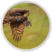 Spotted Eagle Owl In Flight Round Beach Towel