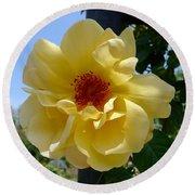 Sunny Yellow Rose Round Beach Towel