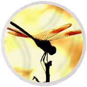 The Light Of Flight Upon The Mosquito Hawk At The Mississippi River In New Orleans Louisiana Round Beach Towel