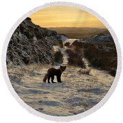 The Pine Marten's Path Round Beach Towel