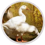Three Geese A Grazing Round Beach Towel