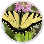 Tiger Swallowtail Butterfly On Milkweed Flowers Round Beach Towel