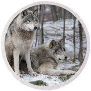 Timber Wolf Pair In Forest Round Beach Towel