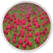 Tulip Beds Forever Round Beach Towel