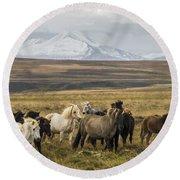 Wild Icelandic Horses Round Beach Towel