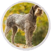 Wire-haired Pointing Griffon Round Beach Towel