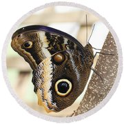 Yellow-edged Giant Owl Butterfly #4 Round Beach Towel by Judy Whitton